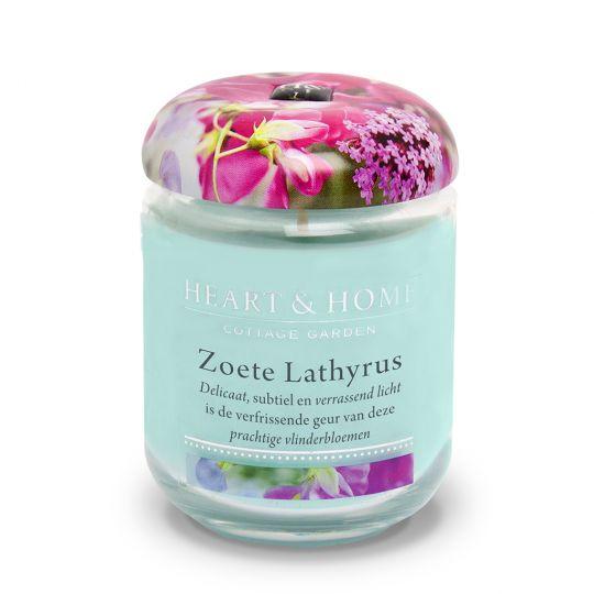 Zoete Lathyrus - pot